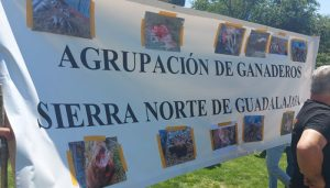 Guadalajara pide en Madrid protección para los ganaderos antes que para el lobo