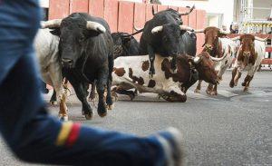 La Federación Taurina Provincial de Guadalajara y ayuntamientos de la provincia se unen para solicitar la posibilidad de realizar festejos taurinos populares tradicionales