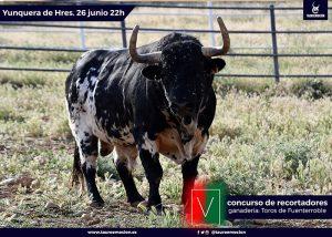 Seriedad y trapío para el concurso internacional de recortadores de Yunquera de Henares