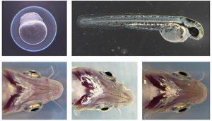 Un estudio de la UCLM sobre el glaucoma congénito analiza el mecanismo genético de la enfermedad