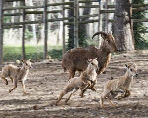 El zoo de Guadalajara reabre sus puertas tras la retirada de más de 300 árboles y el arreglo de parte de los desperfectos de Filomena