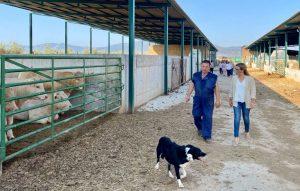 la portavoz del grupo parlamentario popular en las cortes regionales lola merino en su visita a la explotacion ganadera agropecuaria navahermosa etc   Liberal de Castilla