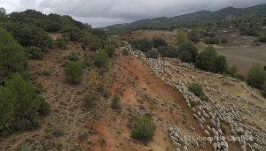 Las organizaciones ecologistas vaticinan que la modificación de la Ley de Vías Pecuarias de Castilla-La Mancha supondrá su desmantelamiento legal y desaparición definitiva
