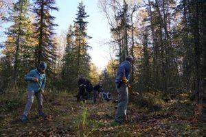 Una investigación de la UAH desvela que utilizar plantas grandes aumenta la supervivencia en restauración forestal