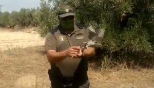 Liberan un mochuelo tras ser recuperado en el Centro de Recuperación de Fauna de Guadalajara