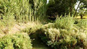 El Valle del Río Cañamares el gran desconocido
