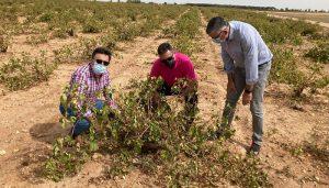 La DANA a su paso por la provincia de Cuenca a arrasado más de 5.500 hectáreas de viñas