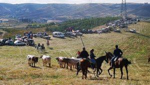 """Jadraque vuelve a disfrutar du su tradicional encierro por el campo de """"El Pilar"""""""