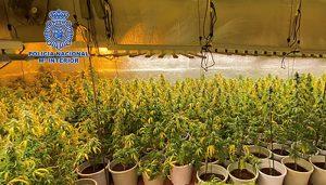 La Policía Nacional desmantela en Cabanillas del Campo una sofisticada plantación de marihuana dotada de gran capacidad de producción