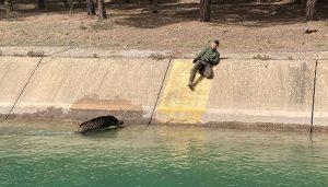 Los cazadores van a la Fiscalía hartos del ahogamiento continuo de animales en el trasvase Tajo-Segura